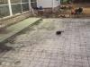 custom-back-patio-stepping-stones-12