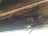 framingrooted boards repair