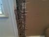Termites In Walls